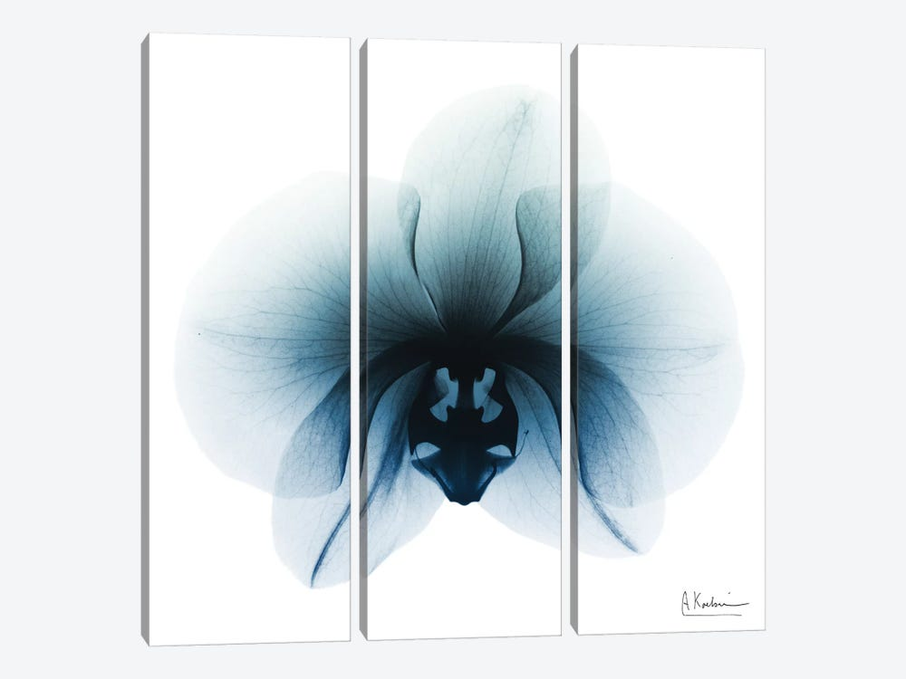 Glacial Orchid I by Albert Koetsier 3-piece Art Print