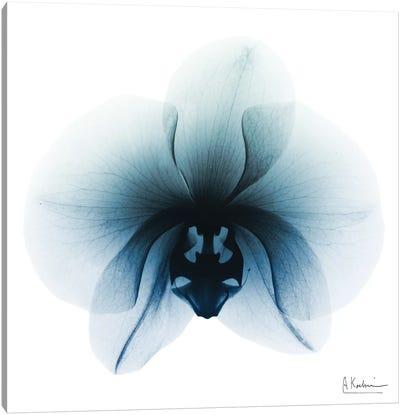 Glacial Orchid I Canvas Art Print