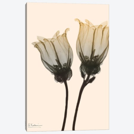 Neutral Canterbury Bells I Canvas Print #ALK125} by Albert Koetsier Canvas Wall Art