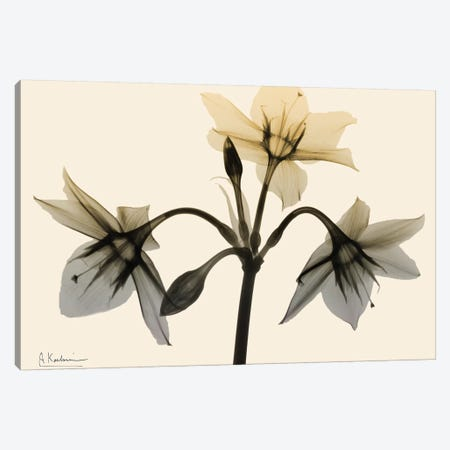 Neutral Trio I Canvas Print #ALK127} by Albert Koetsier Canvas Wall Art