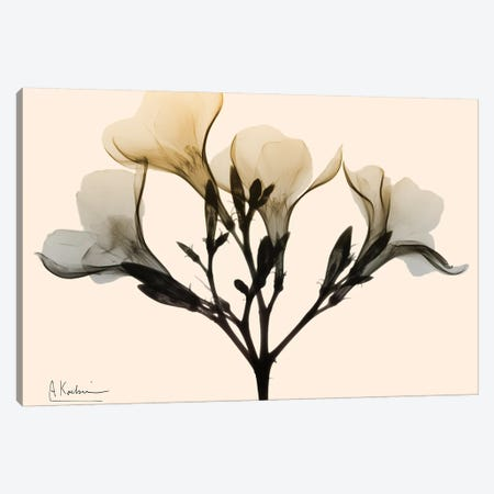 Oleander Dawn Canvas Print #ALK130} by Albert Koetsier Canvas Artwork