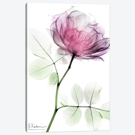Rose Dynasty I 3-Piece Canvas #ALK131} by Albert Koetsier Canvas Artwork