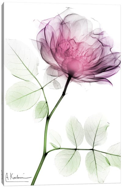 Rose Dynasty I Canvas Art Print