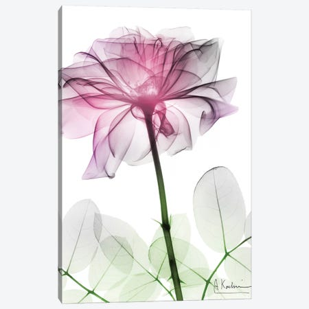 Rose Dynasty II 3-Piece Canvas #ALK132} by Albert Koetsier Canvas Wall Art