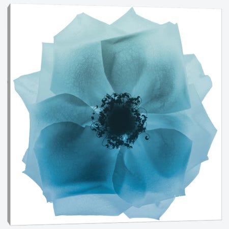 Rose Petal Blues II Canvas Print #ALK134} by Albert Koetsier Art Print