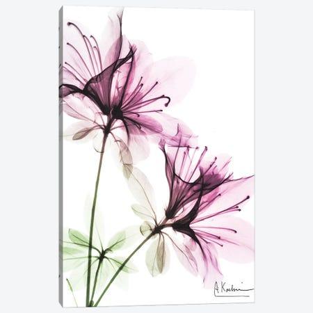 Splendid Beauty I Canvas Print #ALK135} by Albert Koetsier Canvas Print