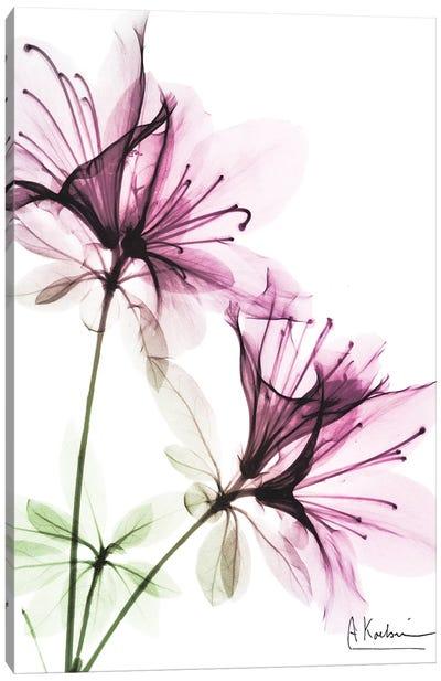 Splendid Beauty I Canvas Art Print