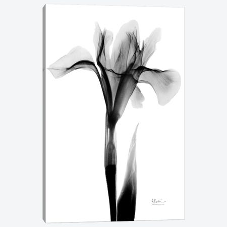 Expressed Iris I Canvas Print #ALK144} by Albert Koetsier Canvas Wall Art