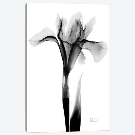 Expressed Iris I Canvas Print #ALK144} by Albert Koetsier Canvas Wall Art