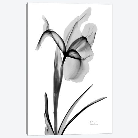 Expressed Iris II 3-Piece Canvas #ALK145} by Albert Koetsier Canvas Art