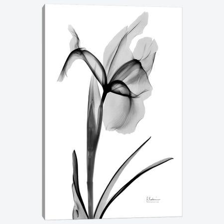 Expressed Iris II Canvas Print #ALK145} by Albert Koetsier Canvas Art