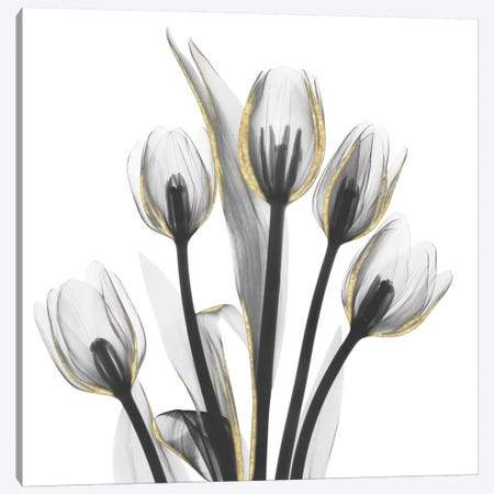 Gold Embellished Tulips I 3-Piece Canvas #ALK147} by Albert Koetsier Canvas Wall Art