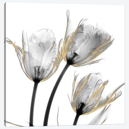 Gold Embellished Tulips II Canvas Print #ALK148} by Albert Koetsier Canvas Art Print