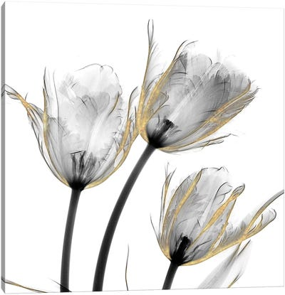 Gold Embellished Tulips II Canvas Art Print