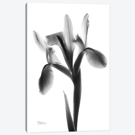 Midnight Le Fleur Canvas Print #ALK157} by Albert Koetsier Canvas Art Print
