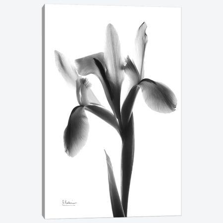 Midnight Le Fleur Canvas Print #ALK157} by Albert Koetsier Canvas Art Print