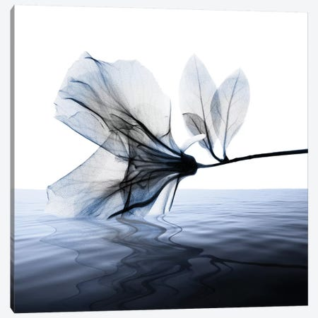Ocean Scent I Canvas Print #ALK158} by Albert Koetsier Canvas Art