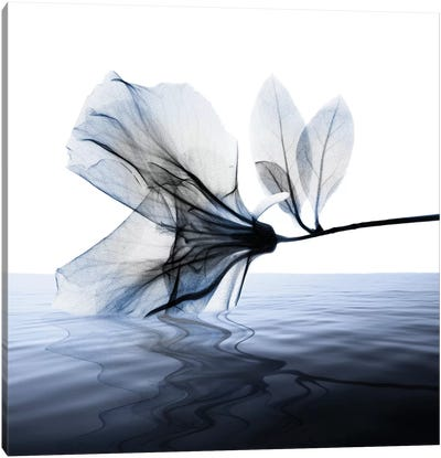 Ocean Scent I Canvas Art Print