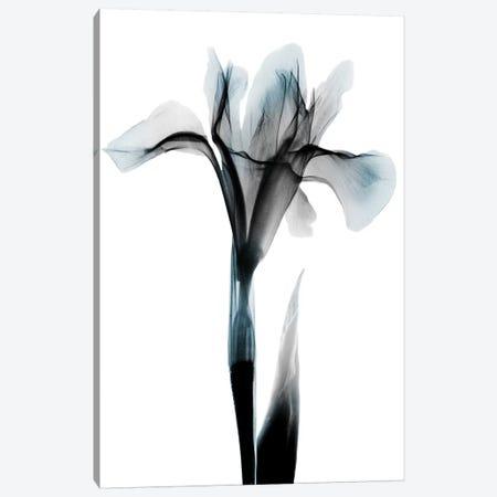 Ombre Sea Salt Iris 3-Piece Canvas #ALK160} by Albert Koetsier Canvas Print