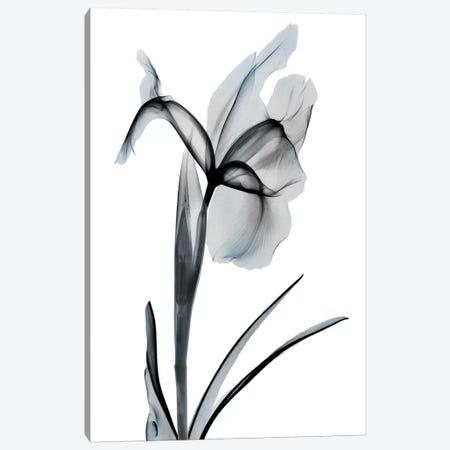 Ombre Sea Salt Iris II 3-Piece Canvas #ALK161} by Albert Koetsier Canvas Print