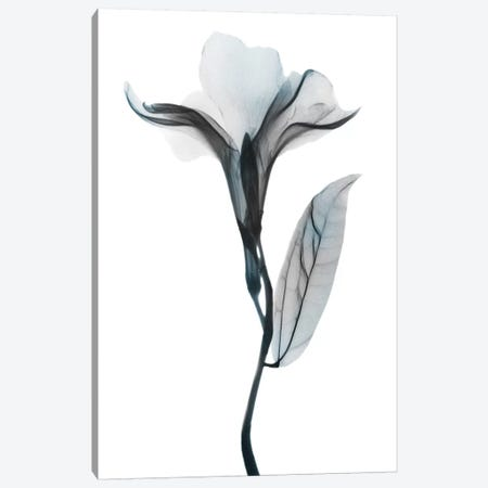 Ombre Sea Salt Oleander I Canvas Print #ALK163} by Albert Koetsier Art Print
