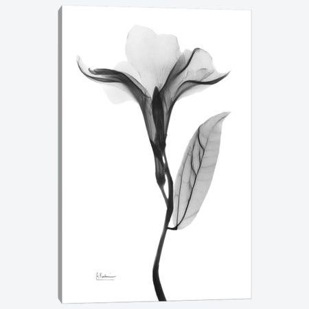Pleasant Oleander I Canvas Print #ALK164} by Albert Koetsier Canvas Artwork