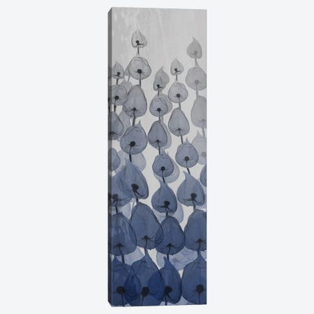 Sapphire Blooms I Canvas Print #ALK169} by Albert Koetsier Art Print
