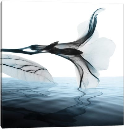 Sea Salt Scent II Canvas Art Print