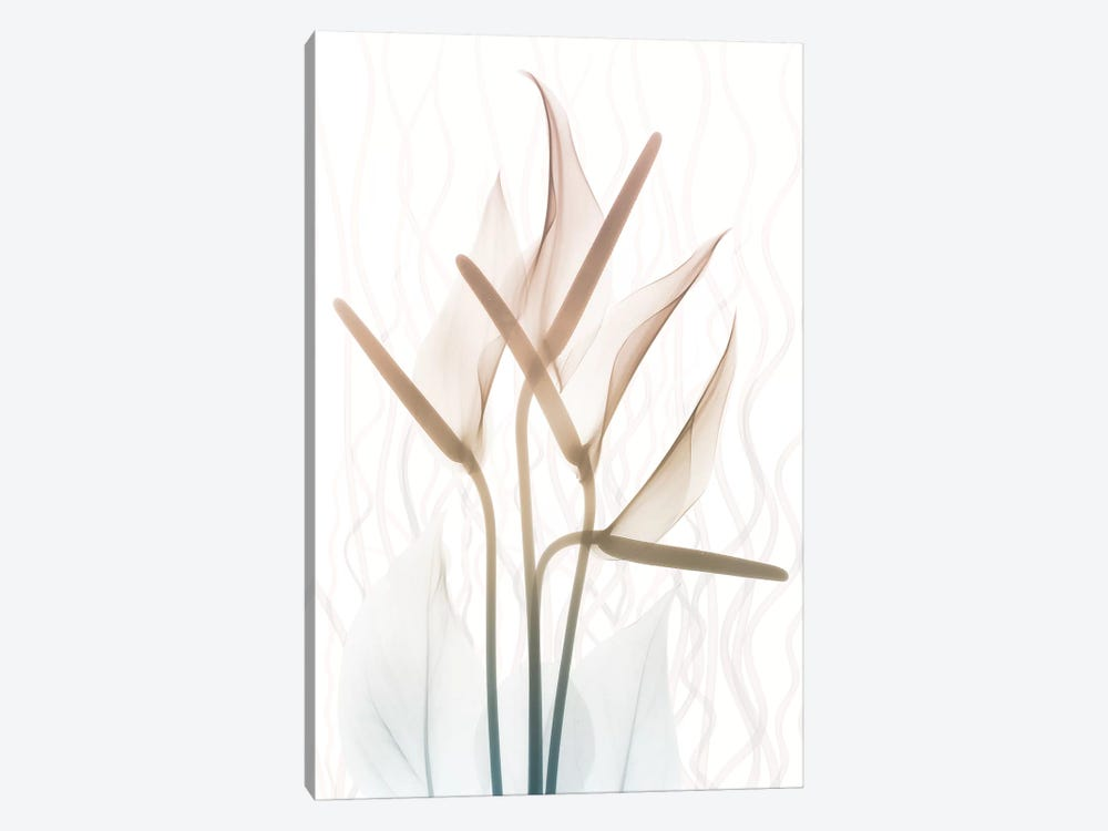 Toned Dawn II by Albert Koetsier 1-piece Canvas Art Print