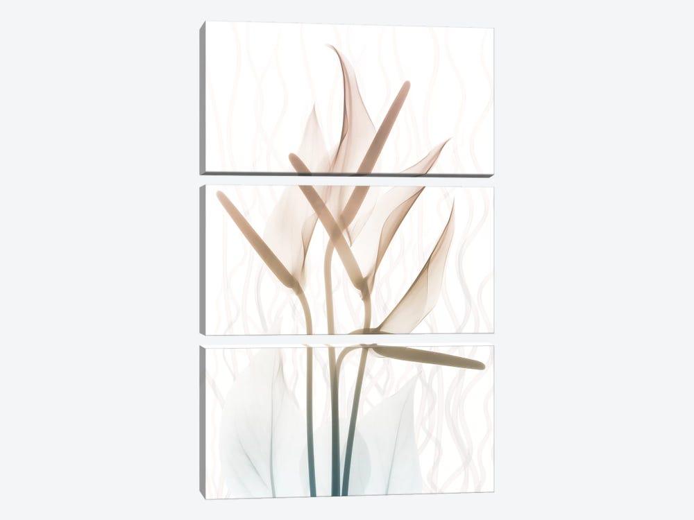 Toned Dawn II by Albert Koetsier 3-piece Canvas Art Print