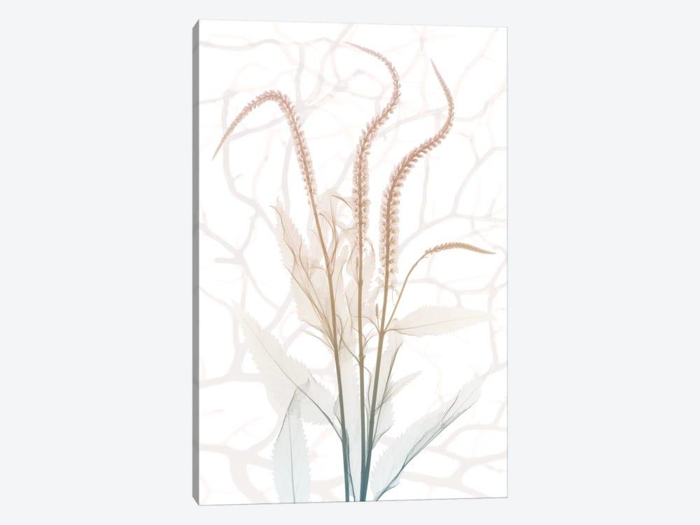 Toned Dawn IV by Albert Koetsier 1-piece Art Print