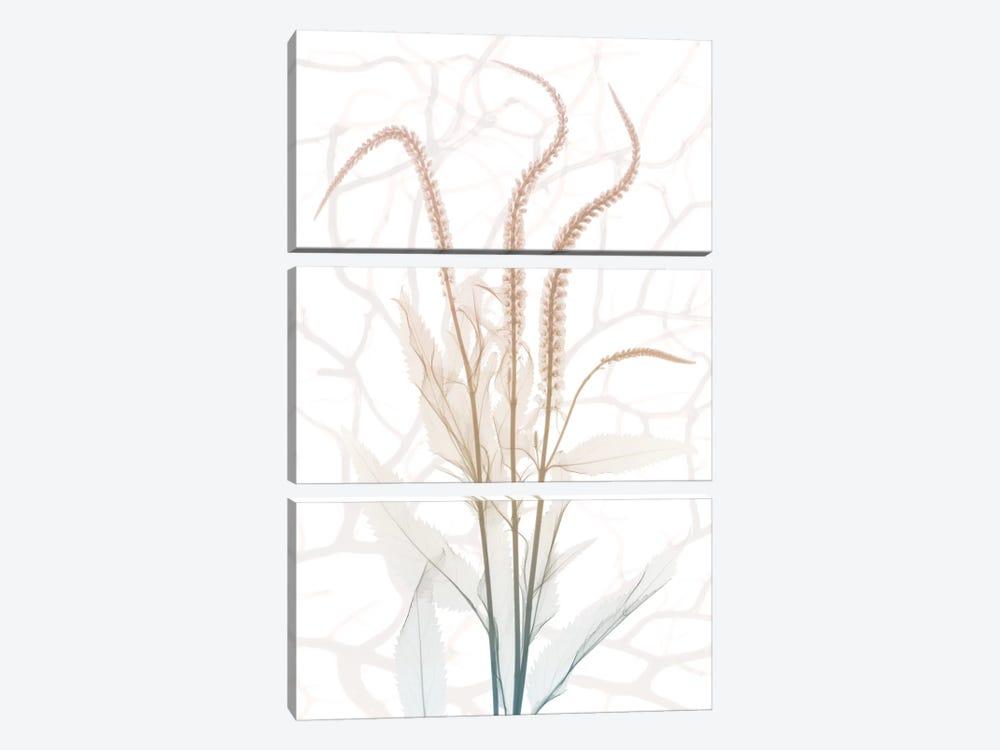 Toned Dawn IV by Albert Koetsier 3-piece Canvas Art Print