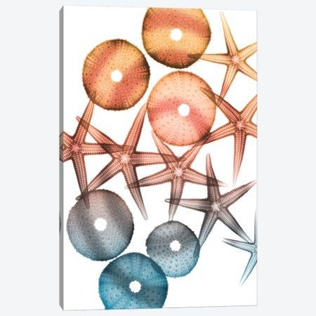 Jolly Starfish I 3-Piece Canvas #ALK184} by Albert Koetsier Canvas Art
