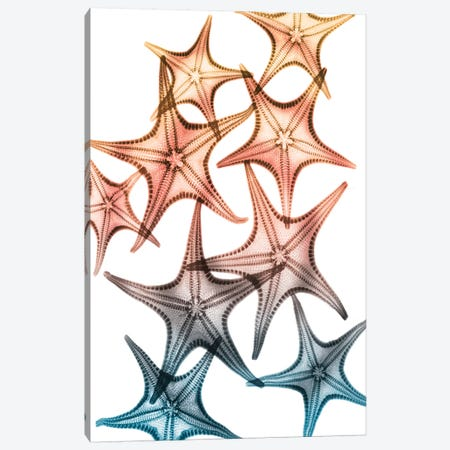 Jolly Starfish II Canvas Print #ALK185} by Albert Koetsier Canvas Wall Art