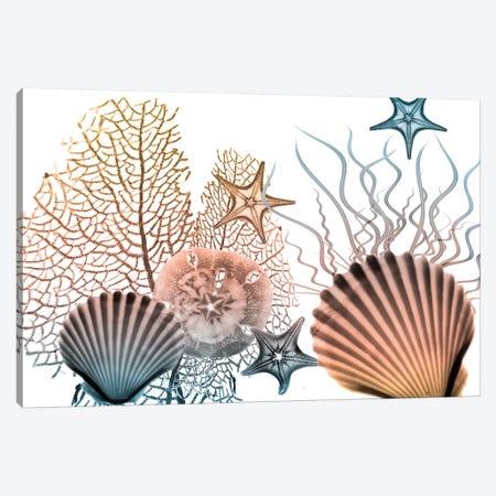Sea Collective II 3-Piece Canvas #ALK197} by Albert Koetsier Canvas Print