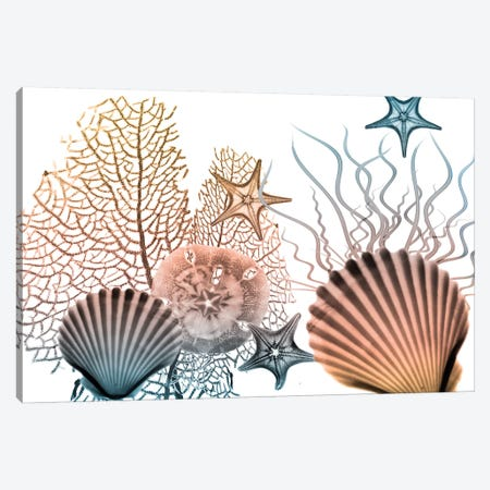 Sea Collective II Canvas Print #ALK197} by Albert Koetsier Canvas Print