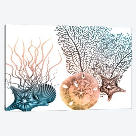 Sea Collective III 3-Piece Canvas #ALK198} by Albert Koetsier Canvas Wall Art