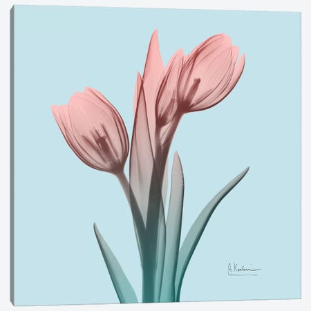 Awakening Tulips I Canvas Print #ALK1} by Albert Koetsier Art Print