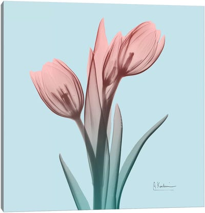 Awakening Tulips I Canvas Art Print