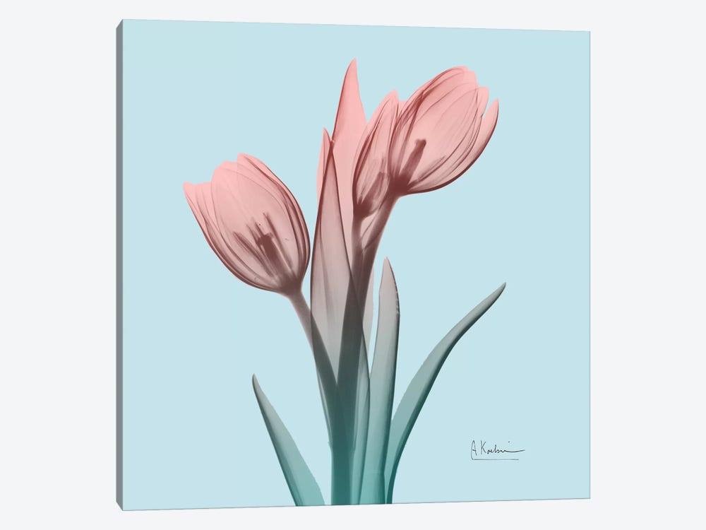 Awakening Tulips I by Albert Koetsier 1-piece Canvas Print