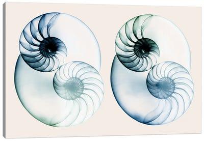 Split Breeze II Canvas Art Print