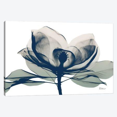 Blue Ranged Magnolia I Canvas Print #ALK251} by Albert Koetsier Canvas Art Print