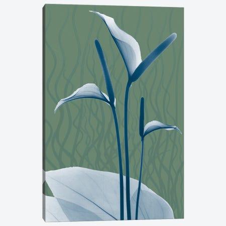 Blue Sage Dawn II Canvas Print #ALK252} by Albert Koetsier Canvas Print
