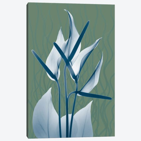 Blue Sage Dawn II Canvas Print #ALK253} by Albert Koetsier Canvas Art Print
