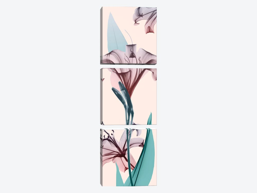 Spring Lily by Albert Koetsier 3-piece Canvas Art Print