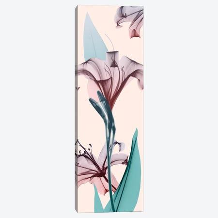 Spring Lily Canvas Print #ALK25} by Albert Koetsier Canvas Art Print