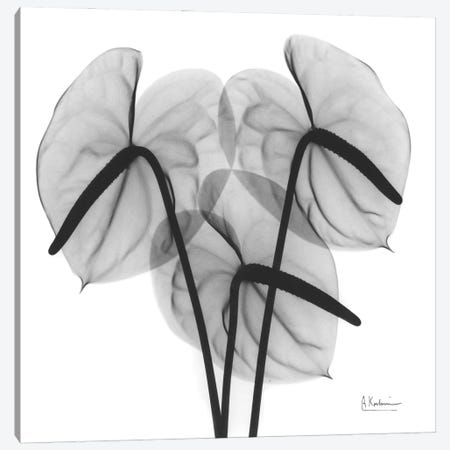Flamingo II Canvas Print #ALK260} by Albert Koetsier Canvas Artwork