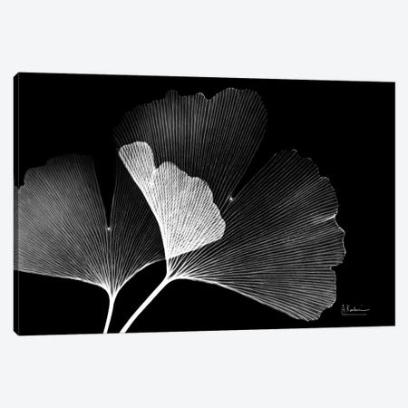 Ginko Canvas Print #ALK263} by Albert Koetsier Canvas Artwork