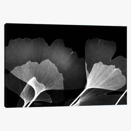 Ginko B/W Canvas Print #ALK264} by Albert Koetsier Canvas Art Print