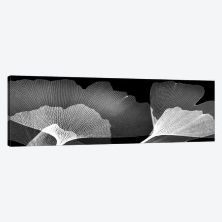 Ginko Panel Canvas Print #ALK265} by Albert Koetsier Canvas Art Print